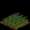 Artichokes-66