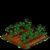 Elderberry 100