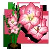 Pink Gladiolas Full Bloom-icon