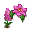 Pyramidal Orchid-icon