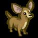 Chihuahua-icon