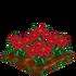 Poinsettiaextra100