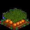 Carrots-super
