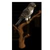 Falcon-icon