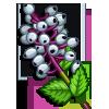 White Baneberry-icon