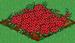 Cranberry 100