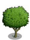 Granny Smith Apple Tree1-icon