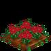 Poinsettia 100