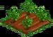 Jungle Blackberry 33