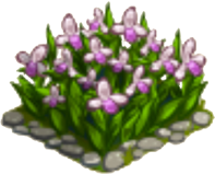 Ladyslipper Flower-icon