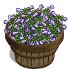 Lyre Leaved Sage Bushel-icon