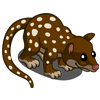 Spotted Quoll-icon
