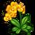 Sunburst Orchid-icon