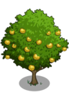 Asian Pear Tree2-icon