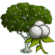 Mahogany Tree-icon