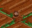 Erdhörnchen Feld