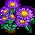 Purple Aster Full Bloom-icon
