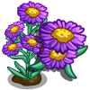 Purple Aster Full Bloom-icon
