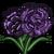 Black Carnation-icon