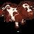 Milking Shorthorn Cow-icon
