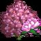 Saucer Magnolia Tree-icon