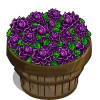 Dark Dahlia Bushel-icon