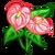 Pink Anthurium-icon
