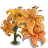 Tiger Lily Full Bloom-icon