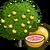 GrapefruitTree
