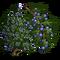 Juniper Tree-icon