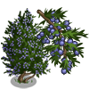 Juniper Tree-icon