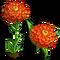 Orange Zinnia Single Bloom-icon
