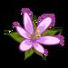 Purple Wildflower-icon