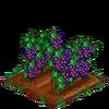 Grapes-super