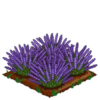 Lavender-super