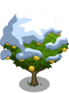 Asian Pear Tree8-icon