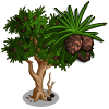 Bristle Pinecone Tree-icon