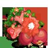 Giant Grenada Pomegranate Tree-icon