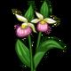 Lady Slipper-icon