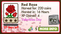 Red Rose Market Info