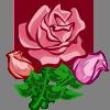 Super Pink Rose-icon