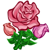 Super Pink Rose-icon