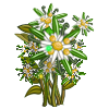 Early Snowflower-icon