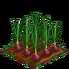 Onion-bloom