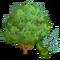 Patchouli Tree-icon