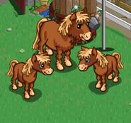 Dartmoor Pony & Foals
