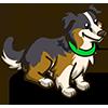 Parti Australian Shephard-icon