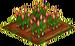 Saffron Crocus 66