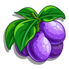 French Petite Plum-icon