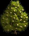 Bay Laurel Tree2-icon